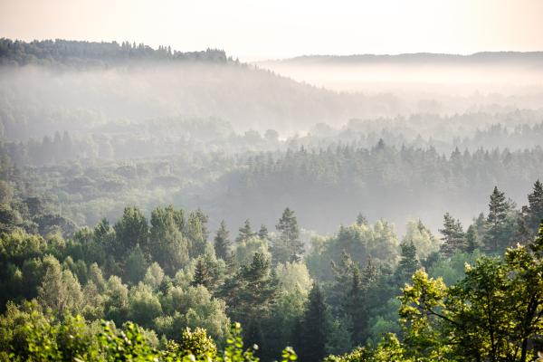 Polen end e Baltische Landen - auto rondreis